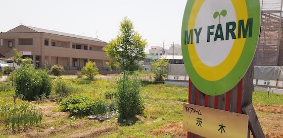 マイファームの農園。アグリメディアの競合にあたるが、強いのは地盤の関西。京都が拠点だ。(参照:http://myfarmer.jp/farms/61/)