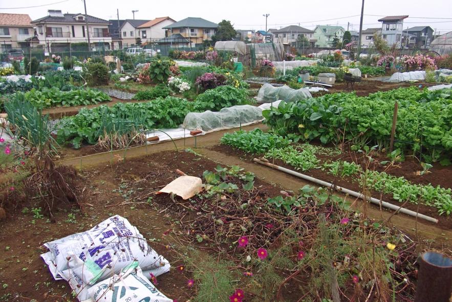安心・安全かつ新鮮な野菜を自分で作れるのが魅力の家庭菜園。市場規模も拡大中だが・・・(参照:http://www.photo-ac.com/main/detail/203386?title=%E5%AE%B6%E5%BA%AD%E8%8F%9C%E5%9C%92)